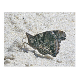 Red Admiral Butterfly on Beach Coordinating Items Postcard