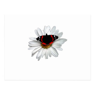 Red Admiral Butterfly on Flower Postcard