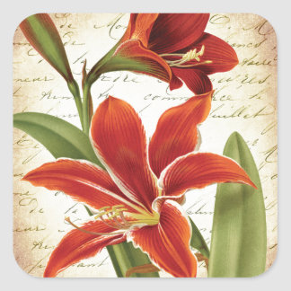 Red Amaryllis Christmas Flower Botanical Square Sticker