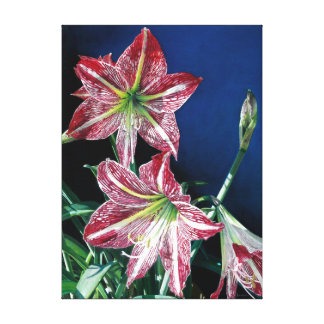 Red Amaryllis - (Oil on canvas) Canvas Print