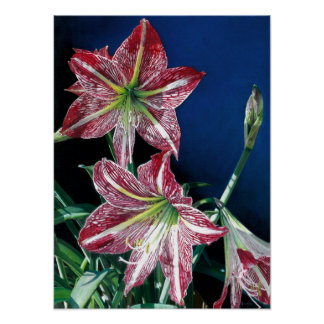 Red Amaryllis - Oil on canvas Poster