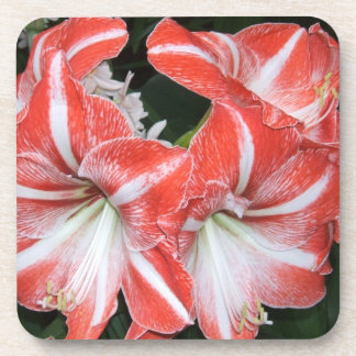Red Amaryllis Plastic Coaster