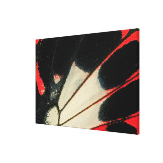 Red and black butterfly close-up canvas print