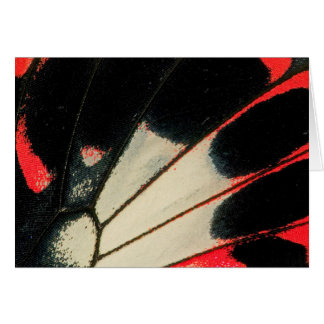 Red and black butterfly close-up card