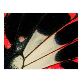 Red and black butterfly close-up postcard