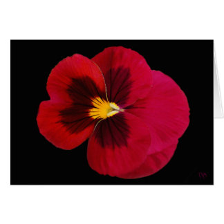 Red And Black Pansy Blank Greeting Cards