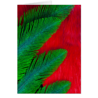 Red And Green Feather Abstract Card
