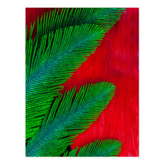 Red And Green Feather Abstract Postcard
