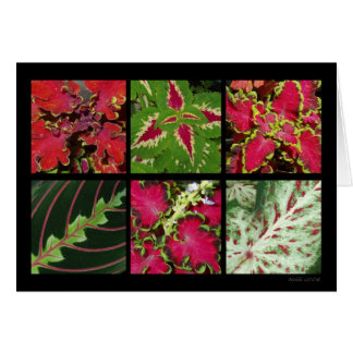 Red And Green Foliage Card