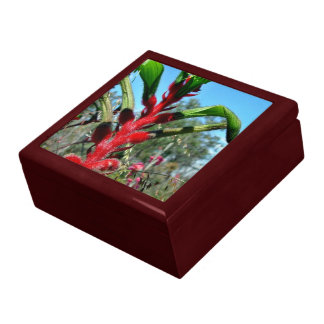 Red and green kangaroo paw flower gift box