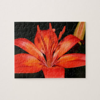 Red and Orange Asiatic Lily Closeup Puzzle
