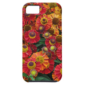 Red and orange helenium flowers iPhone 5 covers