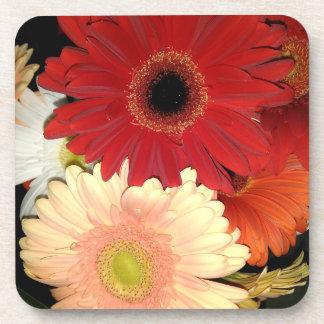 Red and Peach Gerbera Daisy Flowers Coaster