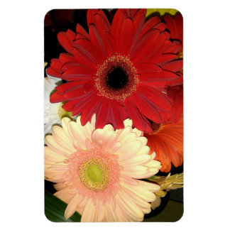 Red and Peach Gerbera Daisy. Magnet