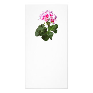 Red And Pink Geranium Card