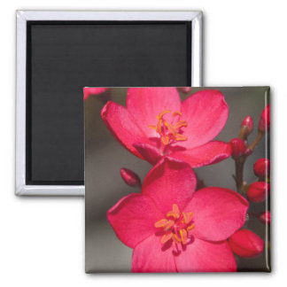 Red and Pink Tropical Fiji Flowers Square Magnet