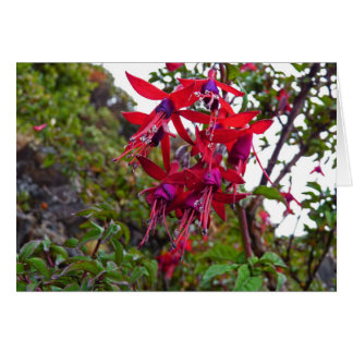 Red and purple Fuchsia Magellanica Card