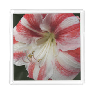 Red and White Amaryllis Floral Serving Tray