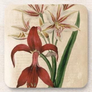 Red and White Amaryllis Flower Coaster