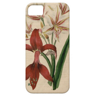 Red and White Amaryllis Flower iPhone 5 Cover
