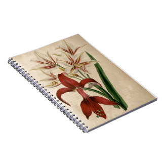 Red and White Amaryllis Flower Notebook
