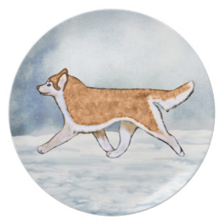 Red and White Amber Eyes Siberian Husky Plate