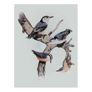 Red and White Breasted Nuthatches Postcard