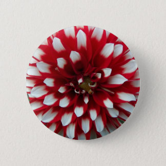 Red and White Dahlia Floral 2 Inch Round Button