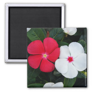 Red and White Flowers Magnet