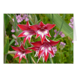 Red and White Gladiolas Summer Garden Floral Card