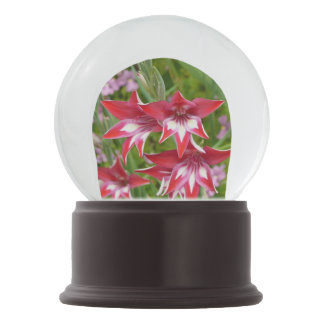 Red and White Gladiolas Summer Garden Floral Snow Globe