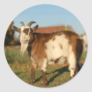 Red and white goat classic round sticker