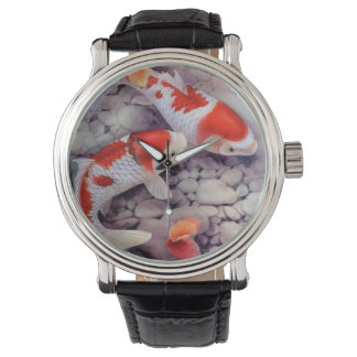 Red and White Koi Fish Pond Watch