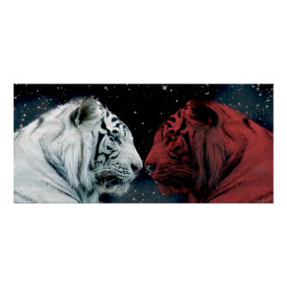 Red and White Tigers Facing Each Other Poster