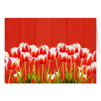 Red and white tulips card