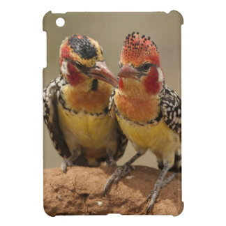 Red and Yellow Barbet eating termites Cover For The iPad Mini