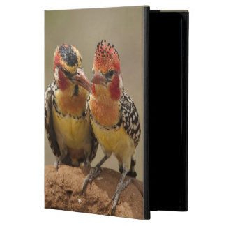 Red and Yellow Barbet eating termites iPad Air Case