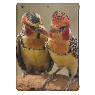 Red and Yellow Barbet eating termites iPad Air Cover