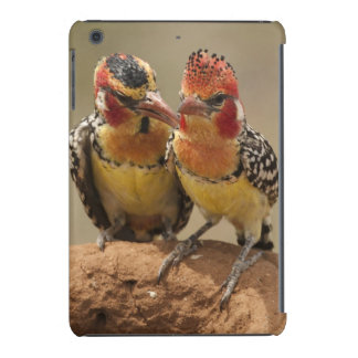Red and Yellow Barbet eating termites iPad Mini Retina Covers