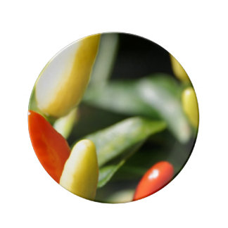 Red and Yellow Chilli Plant Plate