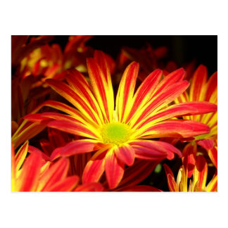 Red and Yellow chrysanthemum flowers customizable Postcard