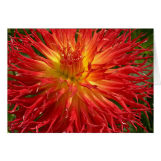 Red And Yellow Crazy Dahlia Multiple Items Card