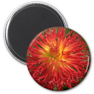 Red And Yellow Crazy Dahlia Multiple Items Magnet