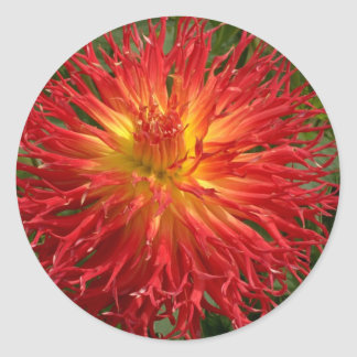 Red And Yellow Crazy Dahlia Multiple Items Round Sticker