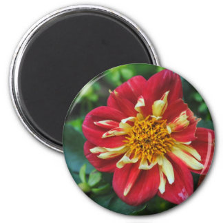 Red And Yellow Flower Magnet