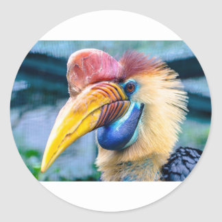 Red and Yellow Hornbill Classic Round Sticker