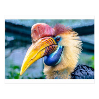 Red and Yellow Hornbill Postcard
