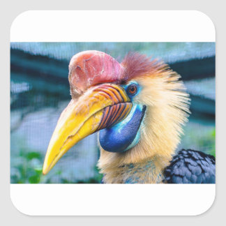 Red and Yellow Hornbill Square Sticker