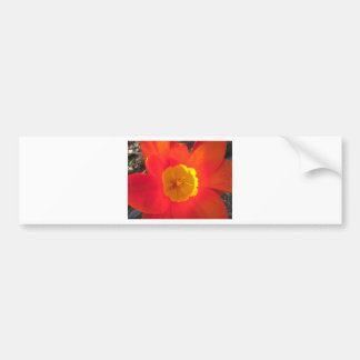 Red and yellow open tulip flower bumper sticker