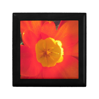 Red and yellow open tulip flower gift box